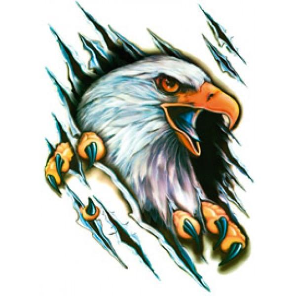 Орел (разрез) 50х35