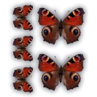 Бабочки Павлиний глаз(разм. 24х27)