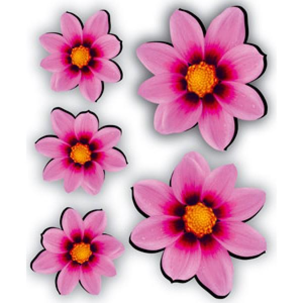 Георгины розовые (разм. 24х27)